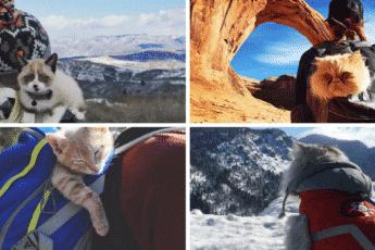 Кэмпинг с кошками