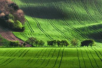 Самые красивые поля в Чехии