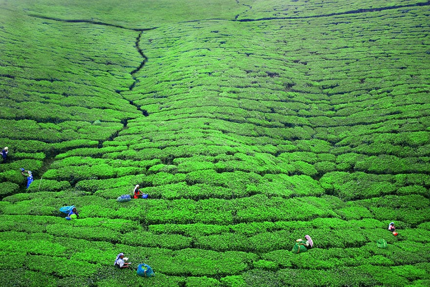 Women-Are-Working-In-The-Tea-Plantations-Near-Nuwara-Eliya-Sri-Lanka