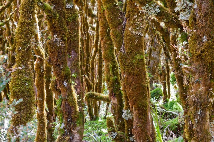 Лес возле озера Мариан, Новая Зеландия