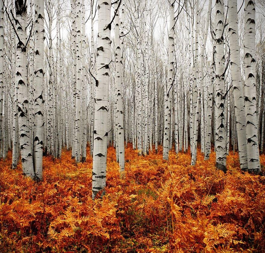 Осень в Аспене, Колорадо