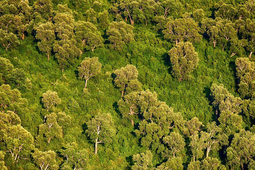 Типичная корсиканская растительность