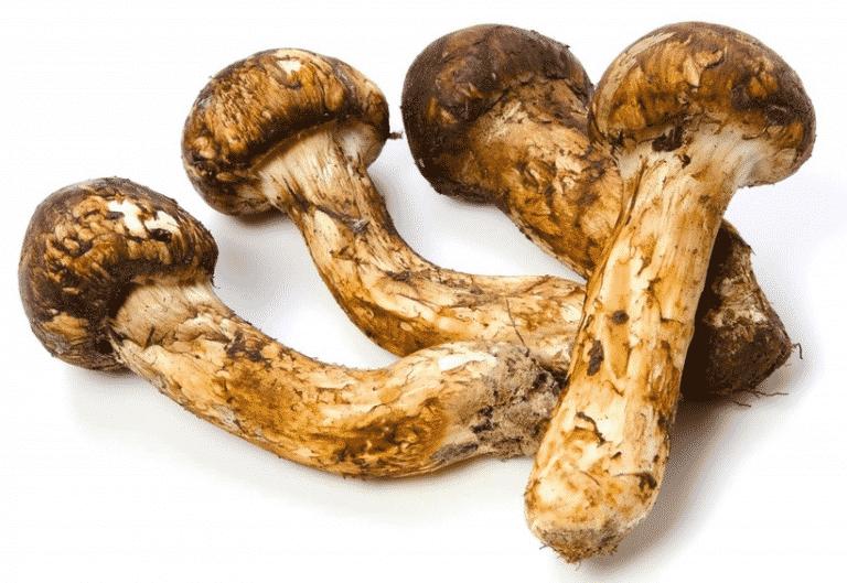 хвост гриб мацутаке фото где обложке изображена